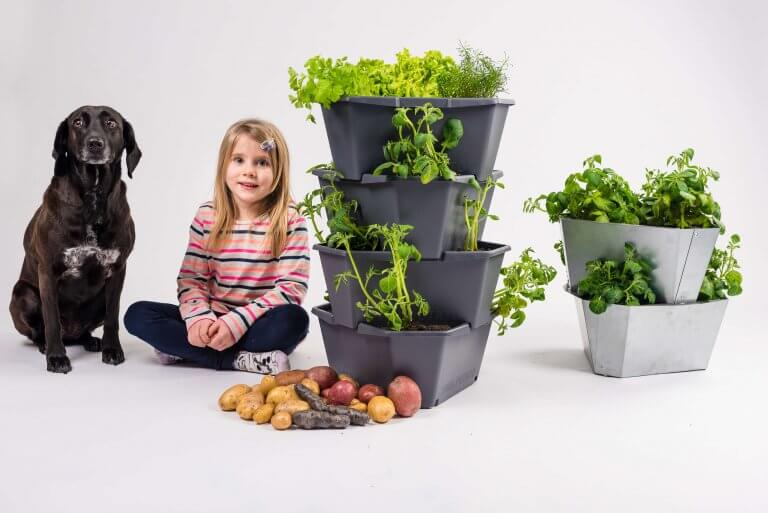 Gusta Garden Paul Potato